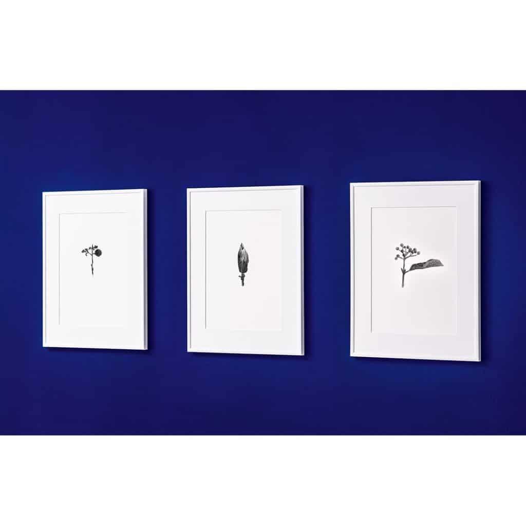 kunstdruck_pflanzen_raumdesign-wien.at